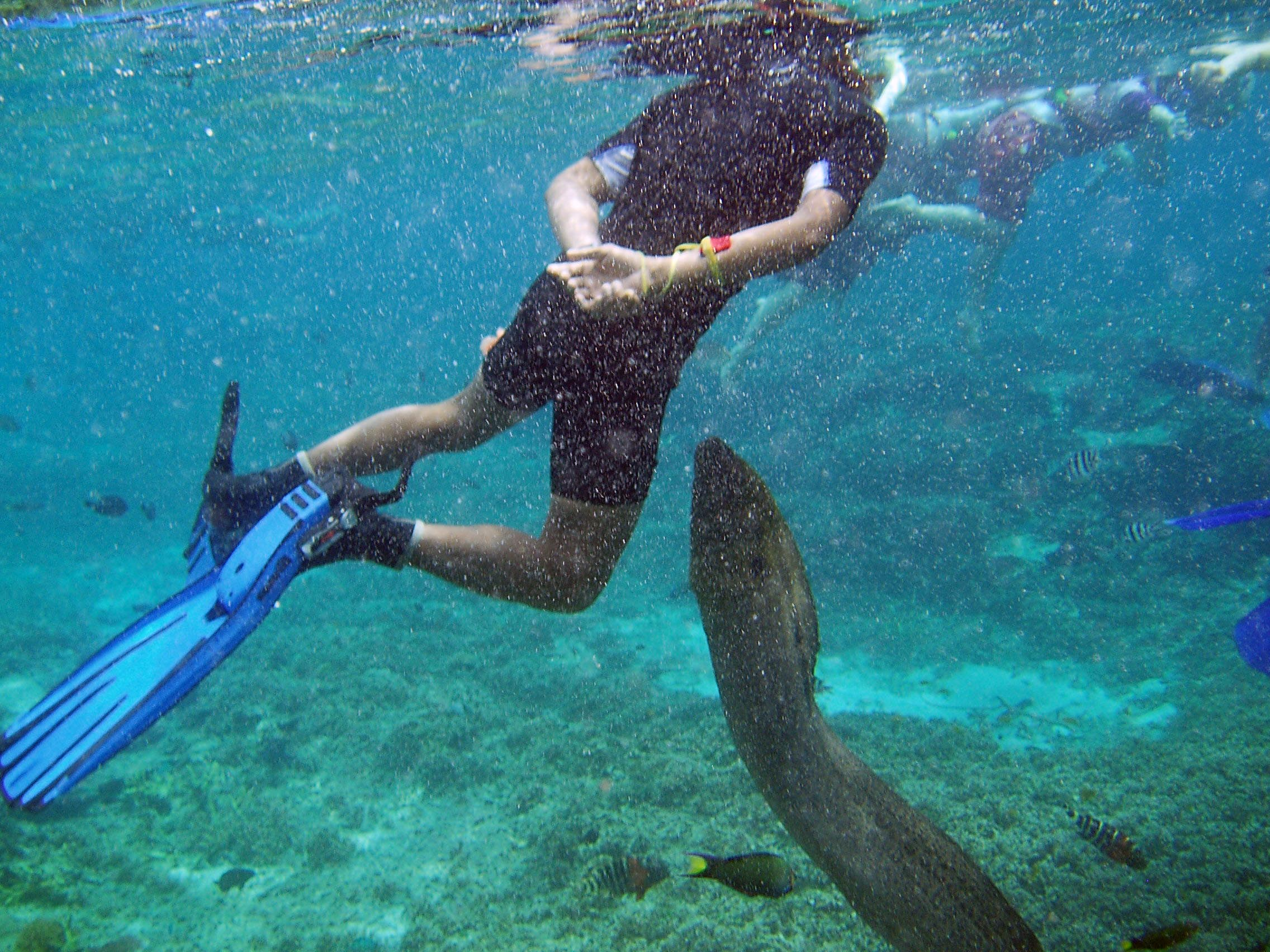 Redang Island Malaysia  city pictures gallery : in snorkeling in redang island malaysia comments are closed but you ...